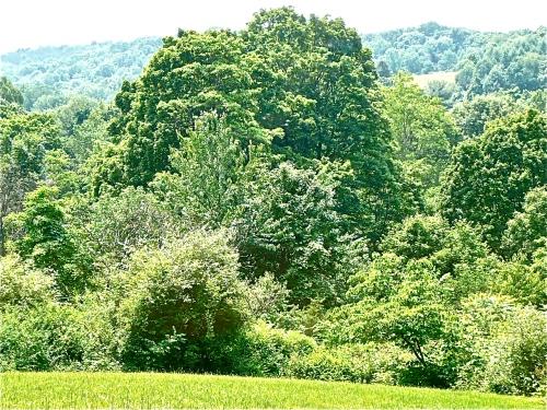 Tree on unseen creek